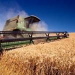 Цена зерна