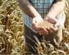 Сговор зернотрейдеров был бы невозможен по определению